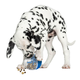 Our Pets Wobble Doggle Dog Toy