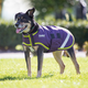 Shires Waterproof Dog Coat XX-Large Seagreen/Pink