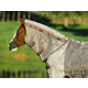 Rambo Qh Protector Neck Cover Large