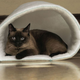 Mysterious Kitty Kup White Cat Bed