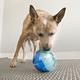 KONG Rewards Ball Dog Toy Small