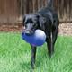 KONG Bounzer Ultra Dog Toy XLarge