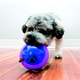 KONG Hopz Ball Dog Toy Small