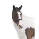 Loveson Elegance Bridle Pony Brown