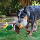 KONG Shakers Honkers Duck Dog Toy Small