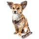Pet Life Luxe Houndsome Dog Harness/Leash XSmall