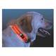 Nite Ize Nite Dawg LED Dog Collar Large