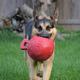 Jolly Pets Tug-n-Toss Ball 10 Inch