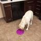 Outward Hound Fun Feeder Flower Dog Bowl Purple