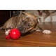 Jolly Pets Mini Tug-n-Toss Dog Toy 4 inch Red
