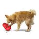 KONG Wobbler Treat Dispensing Dog Toy S/M