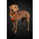 Hurtta Dazzle Hi-Viz Dog Harness 16-18 Lupine
