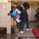 KONG Ballistic Gliderz Dog Toy Small