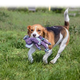 KONG Floppy Knots Dog Toy Medium/Large Hippo