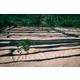 Rwanda Gakenke - Wet Process - Green Coffee Beans
