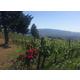 Brehm Fruit - Cabernet Sauvignon - Charlie Smith Vineyards, Moon Mountain AVA, Sonoma County, CA 2019