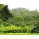 Indonesia Java Taman Dadar - Wet Process - Green Coffee Beans