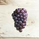 Pinot Grigio, Sonoma CA 2020 (Frozen Grapes, 6 Gallon Pail)