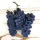 Sangiovese , Livermore Valley CA 2020 (Frozen Grapes, 6 Gallon Pail)