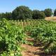 Brehm Fruit - Zinfandel - Dos Limones Vineyard, Sonoma Mountain AVA, CA 2020