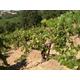 Brehm Fruit - Zinfandel - Edon Knoll Vineyards, Talmage Bench, Mendocino AVA, CA 2013