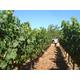 Brehm Fruit - Zinfandel - Plum Ridge Vineyards, Sonoma Valley AVA, CA 2013