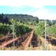 Brehm Fruit - Pinot Noir - White Salmon Vineyards, Columbia Gorge AVA, Underwood, WA 2013