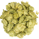 Willamette Whole Hops