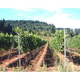 Brehm Fruit - Chardonnay - White Salmon Vineyard, Columbia Gorge, Underwood, WA 2016