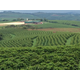 Brazilian Fazenda Da Lagoa - Natural Process - Green Coffee Beans