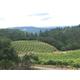 Brehm Fruit - Cabernet Sauvignon - Plum Ridge Vineyards, Sonoma Valley AVA, CA 2017