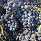 Brehm Fruit - Mourvedre - Landmark Vineyard, Sonoma Valley AVA, CA 2017