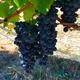Brehm Fruit - Syrah - Plum Ridge Vineyards, Sonoma Valley AVA, CA 2018
