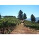 Brehm Fruit - Cabernet Sauvignon - Charlie Smith Vineyards, Moon Mountain AVA, Sonoma County, CA 2018
