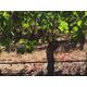 Brehm Fruit - Cabernet Sauvignon - Caldwell Vineyards, Combsville AVA, Napa Valley, CA 2018