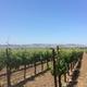 Brehm Fruit - Pinot Noir - Mahoney Estate's Las Brisas Vineyard, Carneros AVA, Sonoma Valley, CA 2018