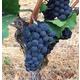 Brehm Fruit - Pinot Noir - White Salmon Vineyards, Columbia Gorge AVA, Underwood, WA 2018