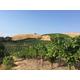 Brehm Fruit - Zinfandel - Plum Ridge Vineyards, Sonoma Valley AVA, CA 2018