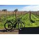 Brehm Fruit - Primitivo - Santo Giordano Vineyard, Carneros AVA, CA 2018