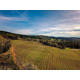 Brehm Fruit -Tempranillo - Delfino Vineyard, Umpqua Valley AVA, OR 2018