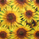 Yellow Sunflower Oilcloth Fabric