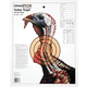 Champion TURKEY TARGETLIFESIZE (12/PK) 45780