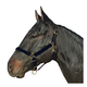 Basic Breakaway Crown Halter with Snap Weanling Re