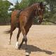 Mustang Balance Training System