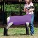 Spandex Lamb Tube Large Purple