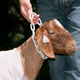Weaver Plastic Goat Chains Large White