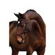 Rambo Micklem Competition Bridle LRG Horse Havana