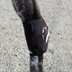 Ice Horse Hock Wrap-Single Pony