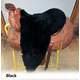 Saddle Guard Sheepskin Western Long Seat Cover Lat