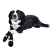 All Weather Muttluks Dog Boots